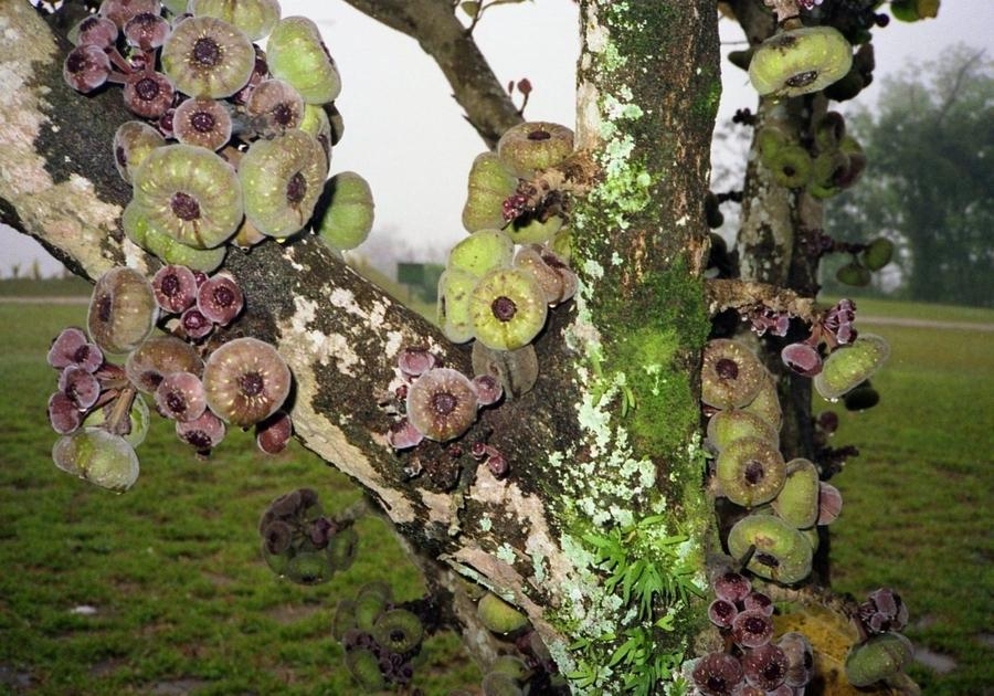 ハート形が可愛い植物画像