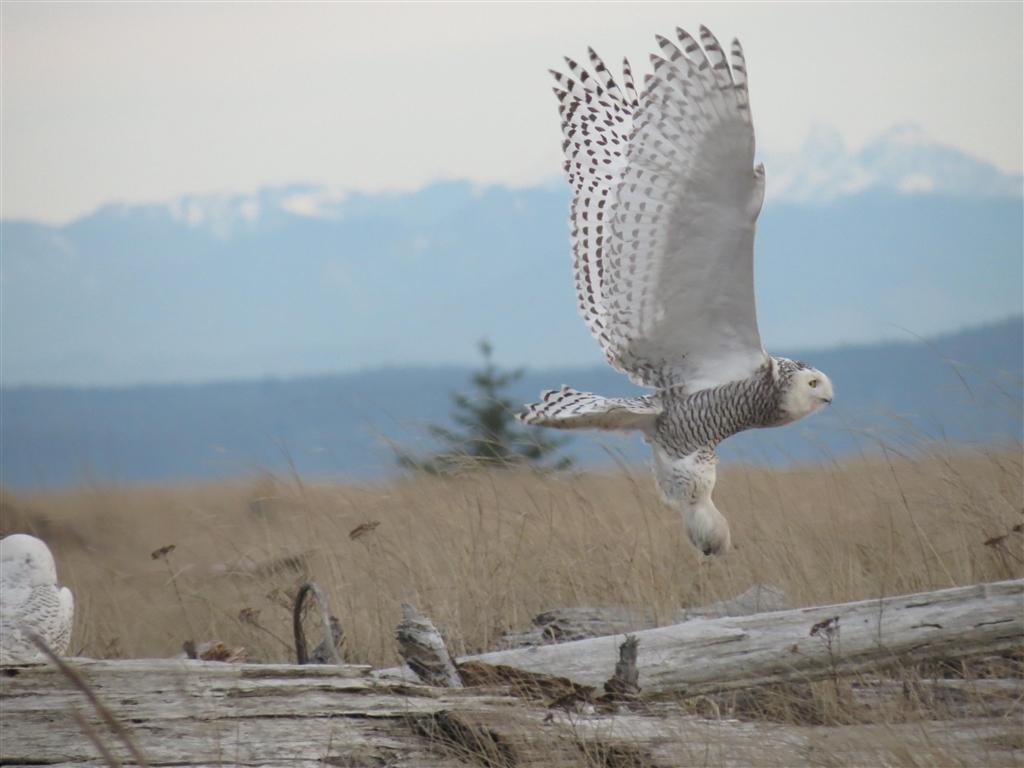 『コンデジでも運がいいと飛んでいる鳥が写ることがあります。』パナソニッ...